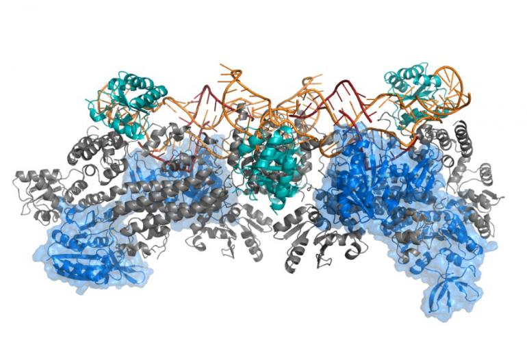 New platform for elucidation of large protein and nucleic acid structures in infections