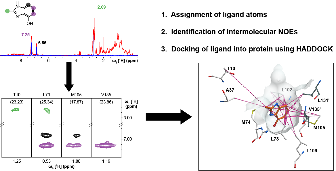 Webinar: High-Confidence Protein−Ligand Complex Modeling by NMR Guided Docking Enables Early Hit Optimization (2018-05-10)