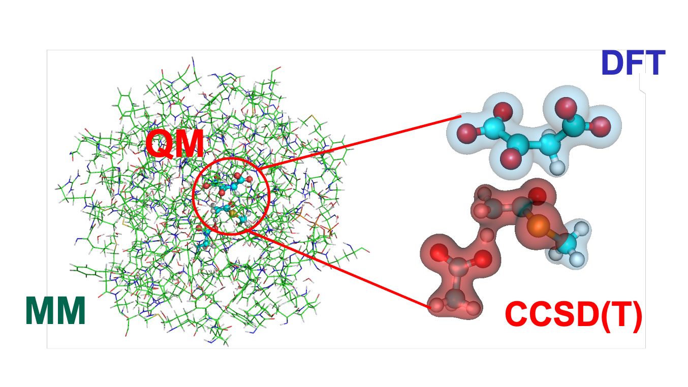 protein molecules highlighted and enlarged with text DFT and CCSD(T) for QM/MM simulations