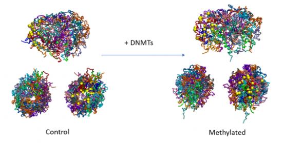 3 DNA molecules undergoing methylation