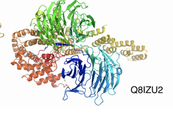 a protein molecule highlighted in red, green and blue